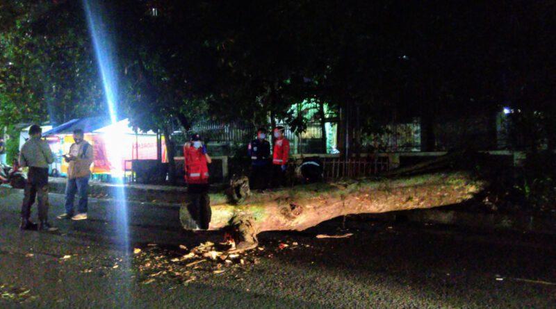 Pohon Tumbang di Jalan Tamansari, Dua Orang Meninggal Dunia